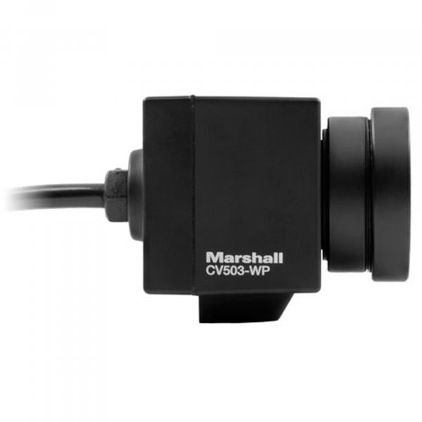 Marshall CV503-WP